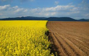Особенности использования земель сельхозназначения 2019