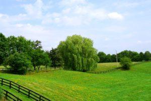 Форма заявления о предварительном согласовании предоставления земельного участка